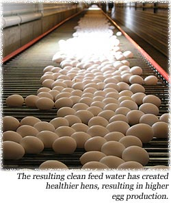 The resulting clean feed water has created healthier hens, resulting in higher egg production.